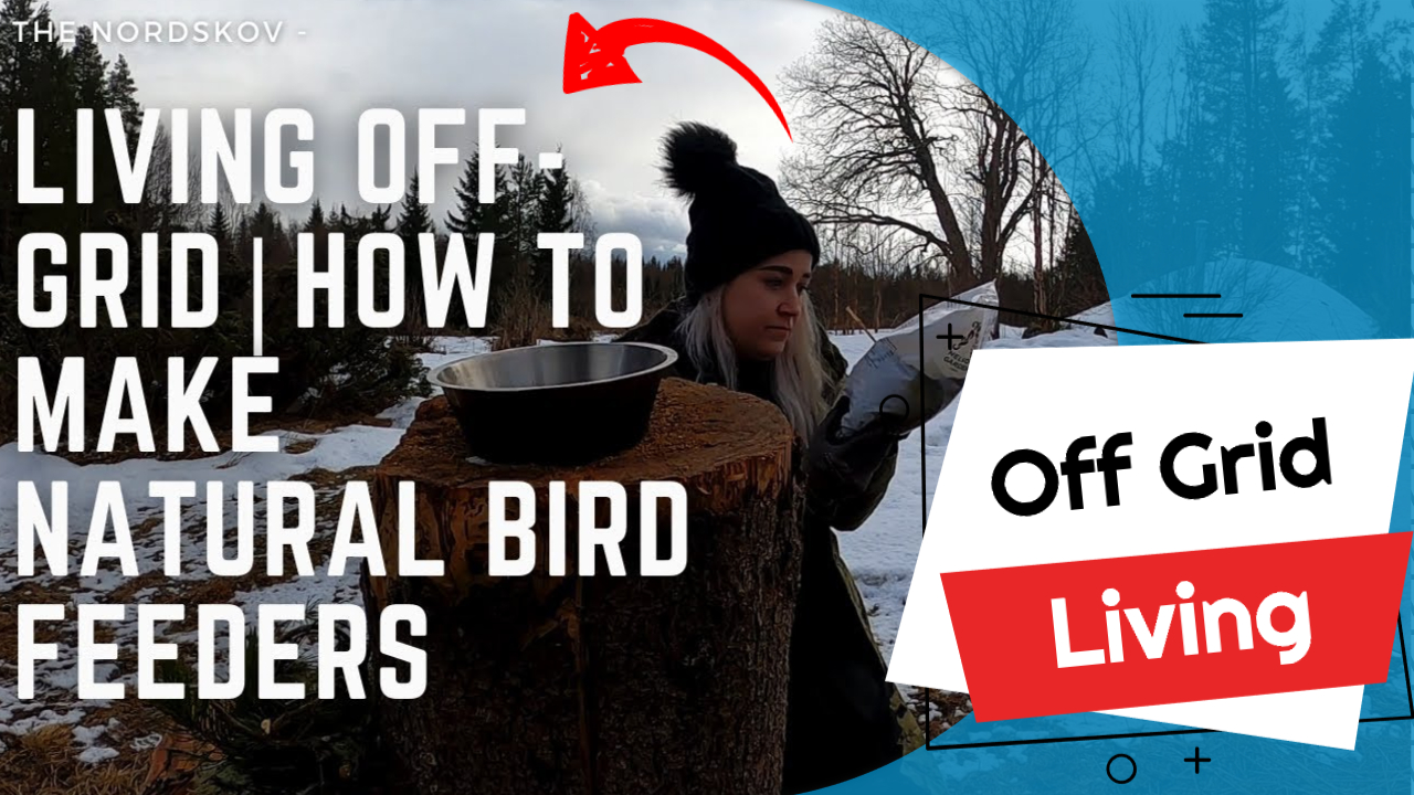 Living off-grid | How To Make Natural Bird Feeders