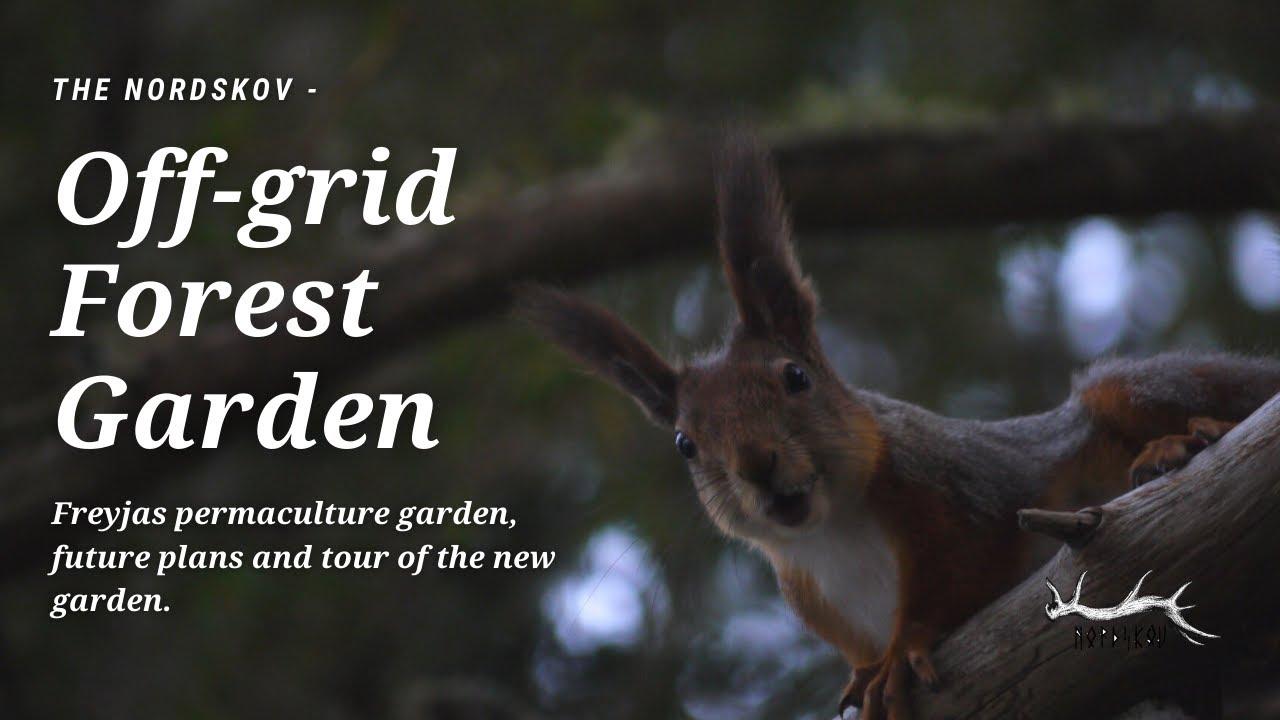 Off-Grid Forest Garden | Freyjas Garden