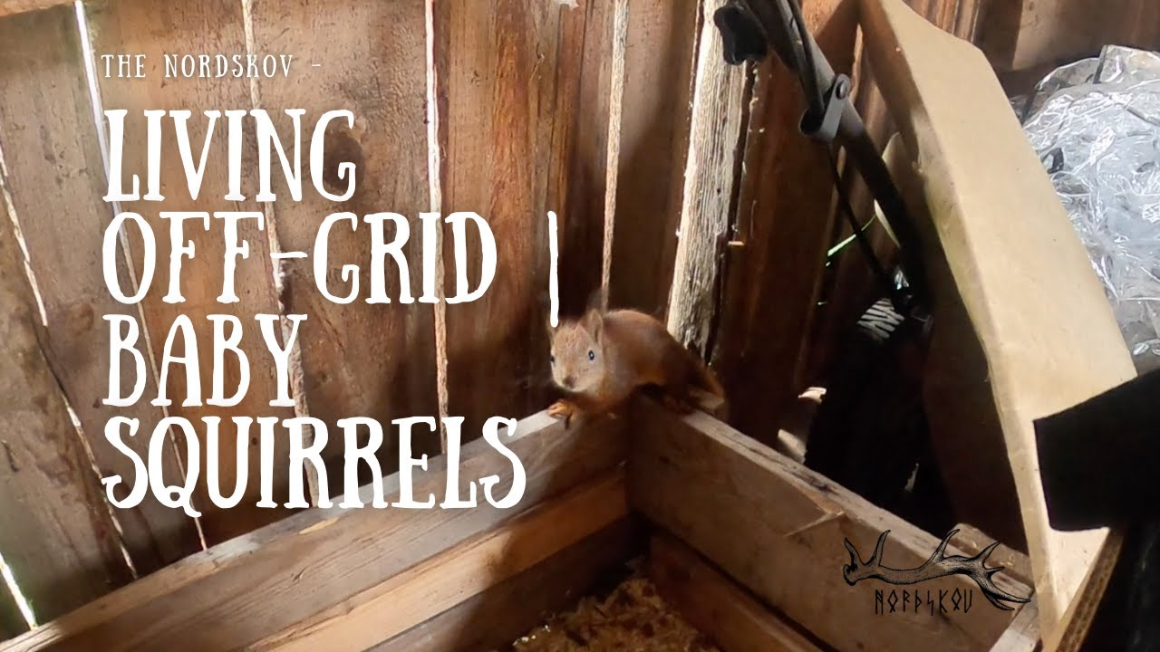 Living off-grid   Baby squirrels